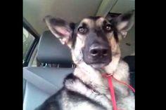 Cachorro faz sucesso dançando com as orelhas - http://metropolitanafm.uol.com.br/novidades/entretenimento/cachorro-faz-sucesso-dancando-com-orelhas