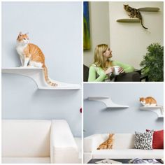 Estantes y escalera de pared como árboles para gatos – Vida vertical
