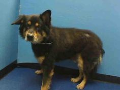 Urgent Part 2 - Urgent Death Row Dogs Animal Shelter, Animal Rescue, Rottweiler Mix, Brooklyn Center, 7 Year Olds, My Heart Is Breaking, My Animal, The Row, Adoption