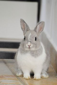 I'm a Bunny not a DOG OK !!! #pet #cute #rabbit #bunny #lol #lapin Discover more photos HERE ==> http://www.yummypets.com/pic/2288097