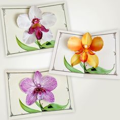 white dragon orchid flower pop up card