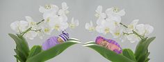 geboortekaartjes, geboortekaart, geboortekaartjes met foto, geboortefoto Newborn Fotografie, Plants, Disney Princess, Plant, Planets