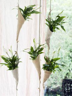 Der edle Einblatt-Vorhang - Pflanzenfreude.de
