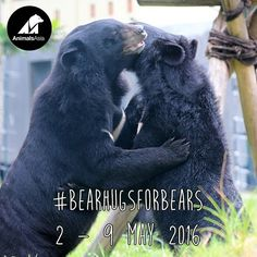 Bear Hugs, Pet Day, May, How To Find Out, Bears, Asia, Campaign, Instagram Images, Profile