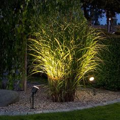 Landscape Gardening Ideas Images regarding Landscape Lighting Transformer Ac Or Dc once Outdoor Landscape Lighting Canada; Landscape Lighting Repair Near Me few Outdoor Landscape Led Lighting Ideas Outdoor Garden Lighting, Outdoor Gardens, Garden Lighting Ideas, Plant Lighting, Garden Ideas, Landscape Lighting Design, Rustic Outdoor, Outdoor Ideas, Outdoor Landscaping