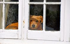 Dog in the Window Jigsaw Puzzle
