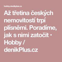 Až třetina českých nemovitostí trpí plísněmi. Poradíme, jak s nimi zatočit • Hobby / denikPlus.cz