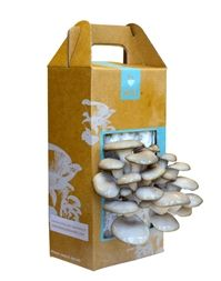- Product Description Grow gourmet, organic oyster mushrooms right out of the box in just 10 days! Just open the box, mist with water, and harvest 10 days later. The Mushroom Farm lasts for months in