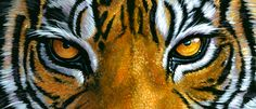 tiger eyes | mike-the-tiger-eyes.jpg