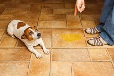 Elimina el olor a orina de perro naturalmente