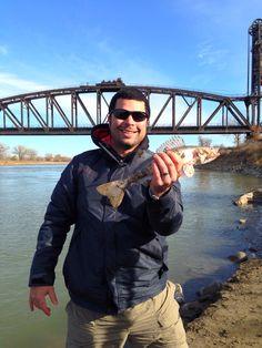 Missouri River Montana - Sauger