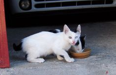 Precioso gatito