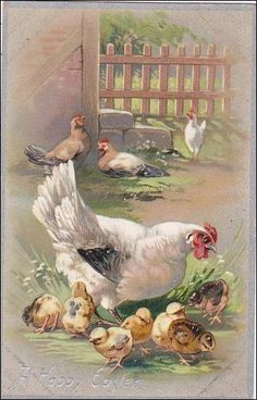 Happy Easter Roosters With Young Chicks Tucks