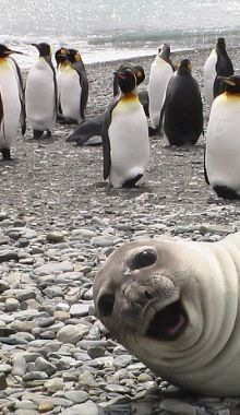 All time, best ever animal photo bombs Smiling Animals, Happy Animals, Animals And Pets, Funny Animal Photos, Cute Animal Pictures, Animal Memes, Cute Little Animals, Cute Funny Animals, Funny Cute