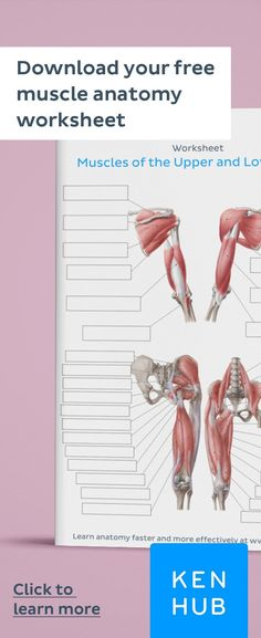 How to Learn All Muscles with Quizzes & Labeled Diagrams Struggling to learn the Start improving your knowledge of right away with our handy worksheets. Human Body Muscles, Human Muscle Anatomy, Human Anatomy, How To Study Anatomy, Muscles Of Facial Expression, Muscle Names, Physical Therapy Student, Occupational Therapy, Basic Anatomy And Physiology
