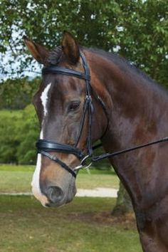The functional Collegiate Padded Flash Bridle is a stylish raised bridle with a padded headpiece for the ultimate in comfort for your horse. This bridle is made from the finest quality leather with highly polished stainless steel fittings and comes supplied with soft padded reins. Make this splendid flash bridle your new staple. Horse Bridle, Horse Saddles, Equestrian Supplies, Stainless Steel Fittings, Horse Tips, Horses, Shapes, Headpiece, Leather