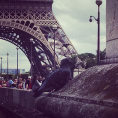 Pigeon que regardes-tu ? La Tour Eiffel ou les nombreux touristes ?