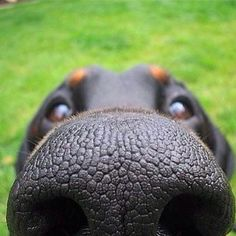 We share amazing dog stories, funny dog pictures, cute puppy pics, inspiring dog tales and news;dog health and training tips to help you care for your dog Animals And Pets, Funny Animals, Cute Animals, Funny Dogs, Cute Dogs, Animal Noses, Dog Jokes, Shelter Dogs, Funny Animal Pictures