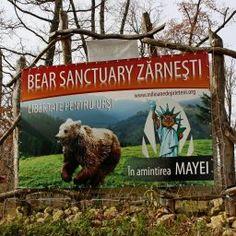 Zarnesti Bear Sanctuary Utila, Visit Romania, Bears, Bear