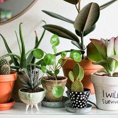 The essentials. #Succulents & #Cacti  #suckerforsucculents