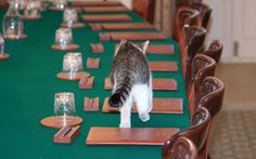After being caught fighting with the chancellor's cat, we look at the   important role Larry plays in Downing Street.