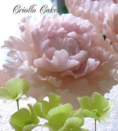 Beautiful Gumpaste Peony.  This woman has beautiful cakes