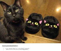 48 Times Tumblr Was Funny About Animals