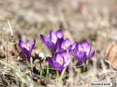 Kevättä odotellessa Peonies, Plants, Blog, Blogging, Plant, Planets