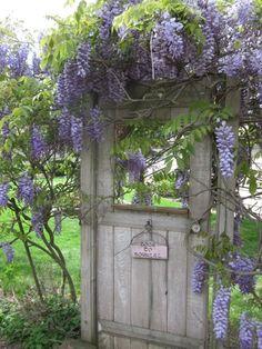 My door to nowhere from my garden of Carey / Meine Tür zu nirgendwo aus meinem Garten von Carey My door to nowhere from my garden of Carey