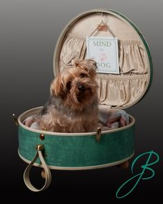 18 super ideas for dogs bed diy suitcase Diy Dog Bed, Cool Dog Beds, Diy Bed, Animal Room, Yorshire Terrier, Custom Dog Beds, Cute Suitcases, Dog Tumblr, Dog Furniture