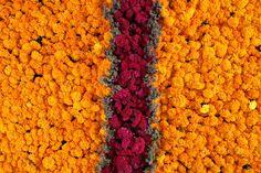 cempasuchil carpet, day of the dead, oaxaca, mexico