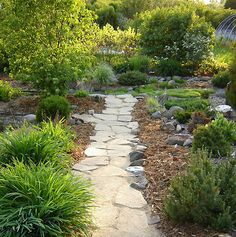 A walkway to the pond. We made this out of recycled concrete chunks.   At Spring Valley Roses.