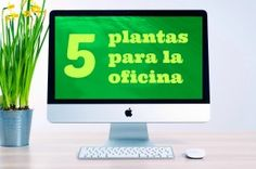 Htm, Plants For Office, Plant Decor, The Office, Offices, Flowers, Spaces