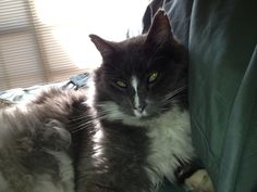 My gorgeous cat Smokie