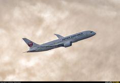 JAL - Japan Airlines JA830J aircraft at Tokyo - Haneda Intl photo