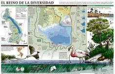 Proyecto Maravillas: Laguna Mar Chiquita. Dengue, Diagram, Map, Editorial, Birds, Projects, Infographic, Cards, Maps