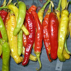 Charleston Hot. 70,000 - 100,000 Scoville Units. Similar to the Carolina Cayenne, the Charleston Hot is a variety of Cayenne created by the U.S. Department of Agriculture in South Carolina. Although it was not bred for its heat, it is much hotter than a regular cayenne, which averages about 30,000 Scovilles. It is almost as hot as a habanero but with a great cayenne flavor.