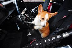 """""""Wait, you didn't want to drive did you?"""" Turbo, having a pull in daddy's Mustang"""