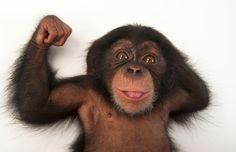 Un giovanissimo scimpanzé