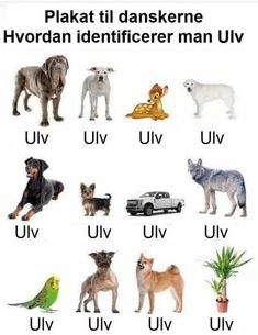 Dogs, Animals, Art, Pet Sematary, Cuddling, Pet Dogs, Tutorials, Animales, Animaux