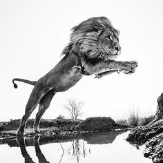 Photographed by David Yarrow