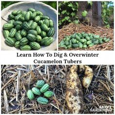 Don't Freak Out=> if you're interested in survival garden plants, it's not a big surprise .Many of us have to rework because we don't know this hack. Click on the link to discover it today. This won't last long