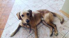 #my#dog# I LOVE you my dog ❤😘😘