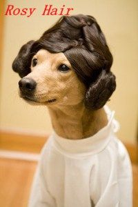 Funny Pictures Of The Day – 61 Pics Princess Leia so sweet Breakfast Nook Funny! Funny Dogs, Funny Animals, Cute Animals, Derp Dogs, Baby Dogs, Dogs And Puppies, Doggies, I Love Dogs, Cute Dogs
