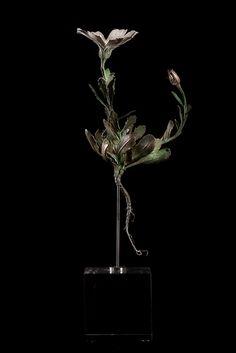 Nic Bladen / Daisy sp. / sterling silver & bronze / 22cm