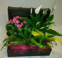 Decoración de baul con plantas para mamá www.latiendadelasflores.es