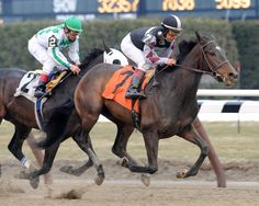 Changing Skies(2005)Sadler's Wells- Magnificent Style By Silver Hawk. 3x4 To Nearctic, 4x4 To Hail To Reason. 4x5 To Native Dancer, 4x5x5 To Nearco. 19 Starts 5 Wins 6 Seconds 3 Thirds. $438,939. Won 2011 La Prevoyante(G3). 2012 The Very One S(G3), 2nd Flower Bowl Inv(G1), New York S(G2), Bewitch (G3). Full Sister To Playful Act.