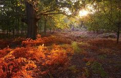Parkhurst Forest, Isle of White
