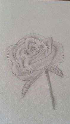 Rose in graphite