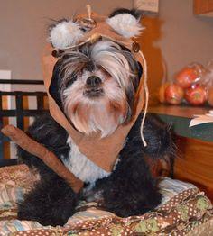diy ewok dog costume - Google Search & Handmade Star Wars Ewok Dog Pet Cosplay Costume | Pinterest ...